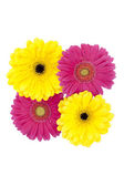 Yellow and pink flowers — Stock Photo