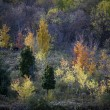 View of autumn trees — Stock Photo #19959467