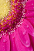 Cropped image of pink flower — Stock Photo