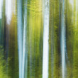 Royalty-Free Stock Photo: A blurry and abstract view of tree trunks in a forest