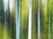 Vista embaçada e abstrata de troncos de árvore em uma floresta — Foto Stock