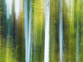 A blurry and abstract view of tree trunks in a forest — 图库照片