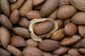 Almond with husk — Stock Photo