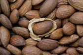 Almond with husk — Stock Photo
