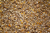 A pile of corn grains — Stock Photo