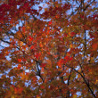 904 view of autumn tree — Stock Photo #22113367