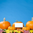 Stock Photo: Group of fresh pumpkins