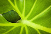 A leaf behind a leaf — Stock Photo
