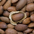 Stock Photo: Almond with husk