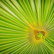 Angled fern focal point — Stock Photo