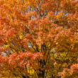 Low angle shot of autumn tree — Stock Photo #24340973