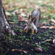 Little squirrel near the tree - Stock Photo