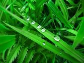 Green grass / blades of grass and water droplets - macro image — Stock Photo
