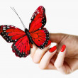 Woman's hand with red fingernails / fingernail polish is holding a vivid red butterfly — Stock Photo
