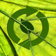 Recycling symbol leaf arrows on translucent green leaf background / natural / nature / environment/ ecology - Stock Photo