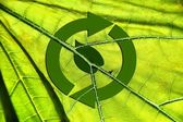 Recycling symbol leaf arrows on translucent green leaf background / natural / nature / environment/ ecology — Stock Photo
