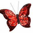 Beautiful red butterfly insect, isolated on white background — Stock Photo