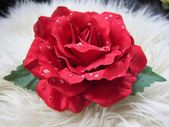 Single beautiful pretty red rose flower hair clip decoration with water droplets on cream fluffy background — Stock Photo
