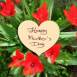 Happy Mother's Day picture image illustration with red tulips — Stock Photo