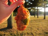 Fried mozzarella cheddar cheese stuffed jalapeno pepper popper in the autumn fall sun sunlight — Stock Photo