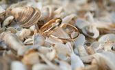 Anelli di nozze — Foto Stock