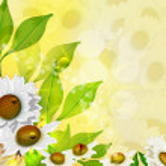 Summer. Flowers. background — Stock Photo