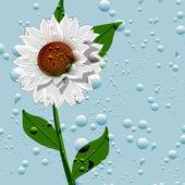 Zomer. bloemen. achtergrond — Stockfoto