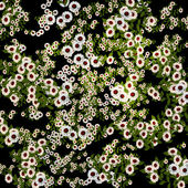 Group of daisies flowers — Stock Photo
