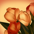 Postcard from holiday. Tulip flowers. — Stock Photo
