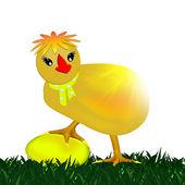 Chicken. Egg. — Stock Photo