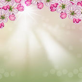 Background from the flowers of apple — Stock Photo