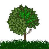 Albero con foglie verdi — Foto Stock