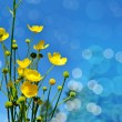 Background of flowers. Buttercups. — Stock Photo