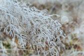 Grass. Hoarfrost. — Stock Photo