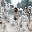 Grass. Hoarfrost. — Stock Photo