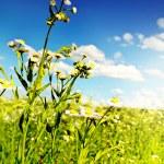 Daisies against the blue sky. — Stock Photo #34622281