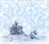 Foresta invernale. paesaggio. — Foto Stock