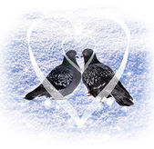 Lovers pigeons. — Stock Photo