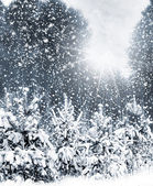 Snowfall in the forest. — Stock Photo