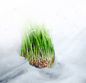 Snow. Grass. — Stock fotografie