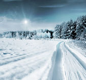 Winter Forest. Landscape. — Stock Photo
