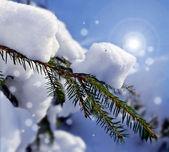 Träd i vinter skog — Stockfoto