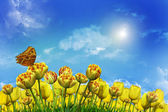 Tulips against the blue sky — Stock Photo