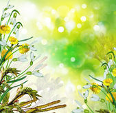 Snowdrops flowers  — Stock Photo
