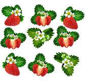 Kvist blommor jordgubbar — Stockfoto