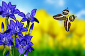 цветки ириса и бабочка — Стоковое фото