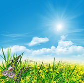 Summer landscape with field flowers on a background of blue sky  — Stock Photo