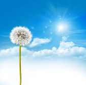 Dandelion seeds on a blue sky — Stock Photo