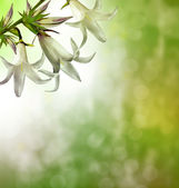 Floral background of delicate flowers bluebells — Stock Photo