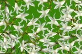 Abstract floral background of white bells — Stock Photo